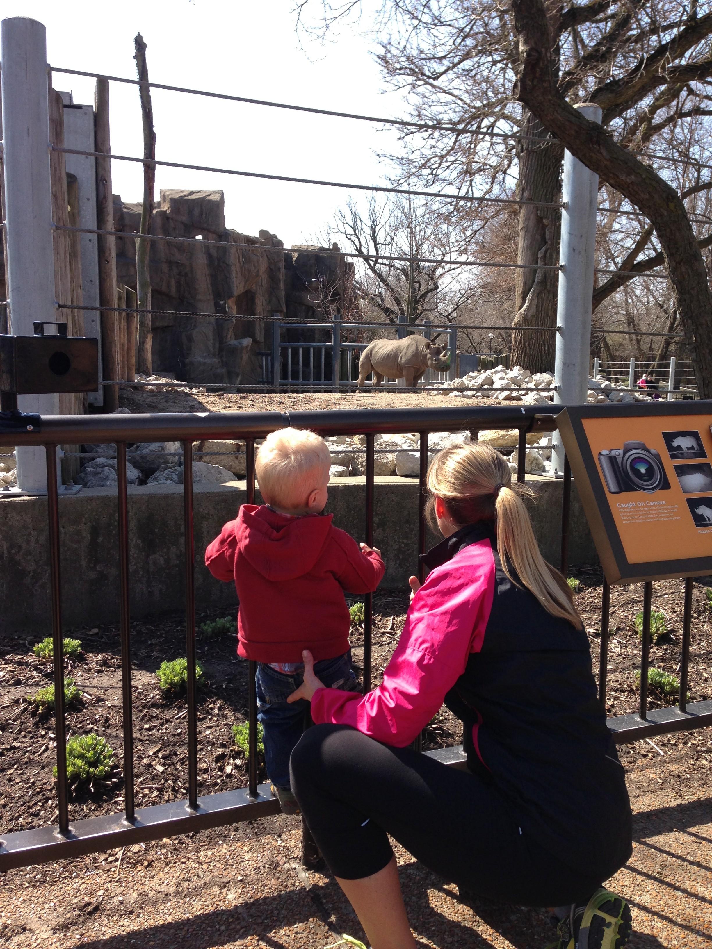 Lincoln Park Zoo run